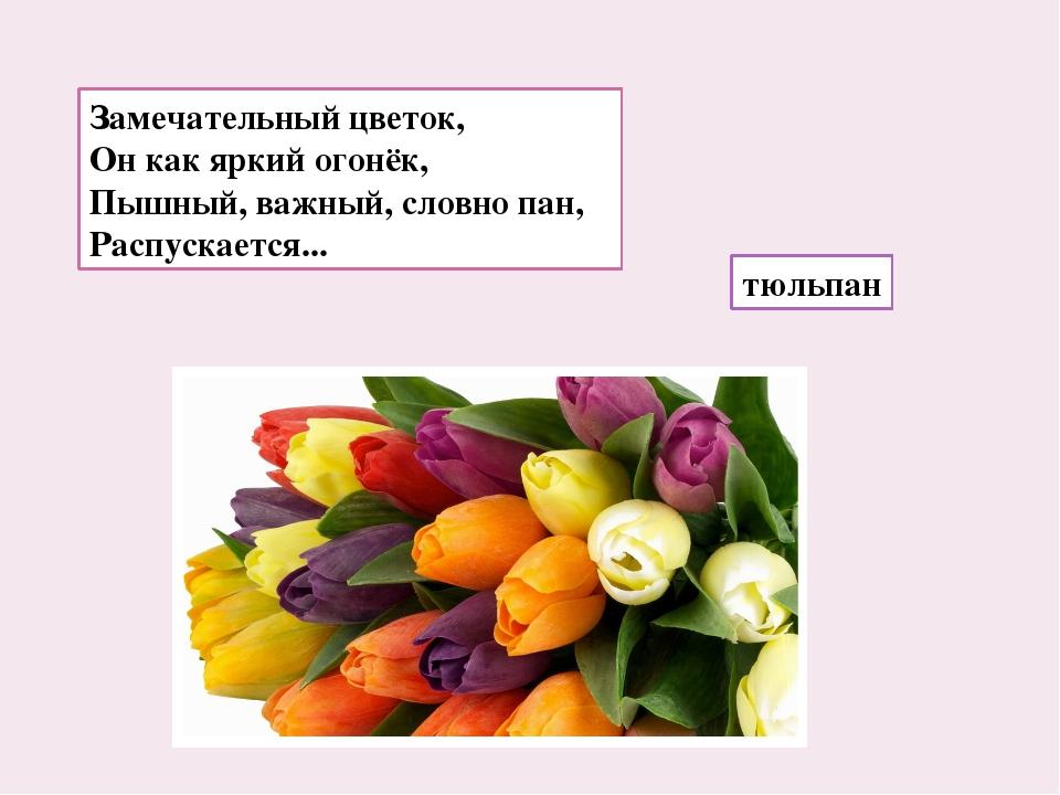 Замечательный цветок, Он как яркий огонёк, Пышный, важный, словно пан, Распус...