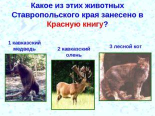 Какое из этих животных Ставропольского края занесено в Красную книгу? 1 кавка