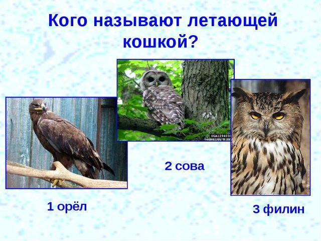 Кого называют летающей кошкой? 1 орёл 2 сова 3 филин