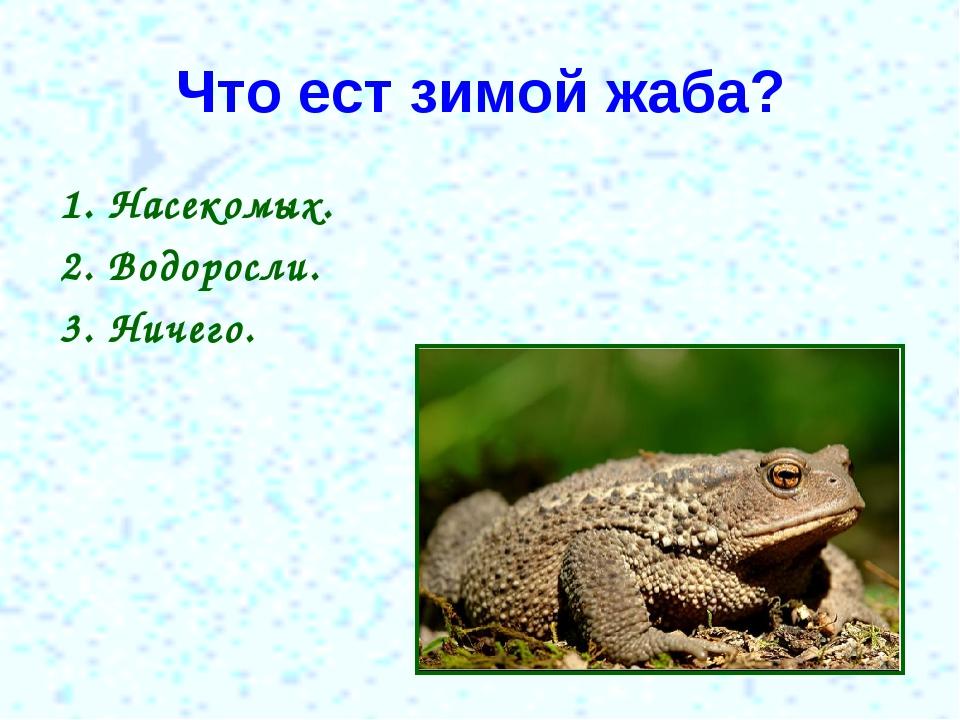Что ест зимой жаба? 1. Насекомых. 2. Водоросли. 3. Ничего.