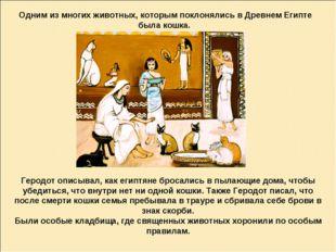 Одним из многих животных, которым поклонялись в Древнем Египте была кошка. Ге