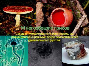 Многообразие грибов Сегодня путешествуя по стране грибов, вы познакомитесь с