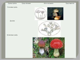 Группы грибов Среда обитания «Фото на память» Представители Плесневые грибы Д