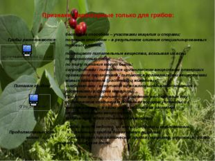 Признаки, характерные только для грибов: Грибы размножаются: бесполым способо