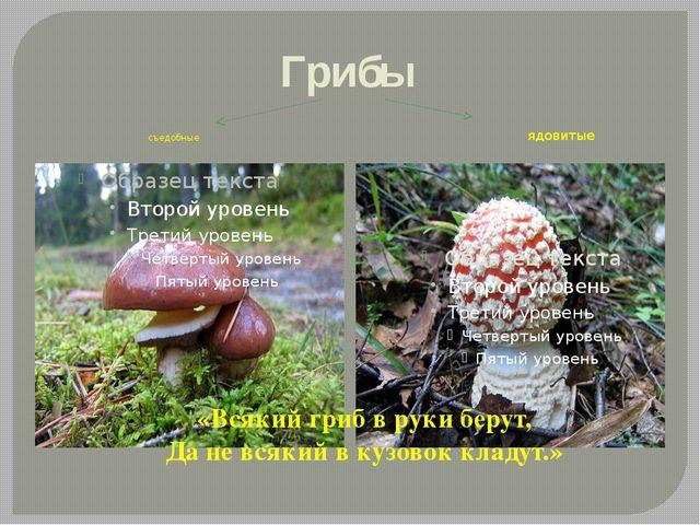Грибы съедобные ядовитые «Всякий гриб в руки берут, Да не всякий в кузовок кл...