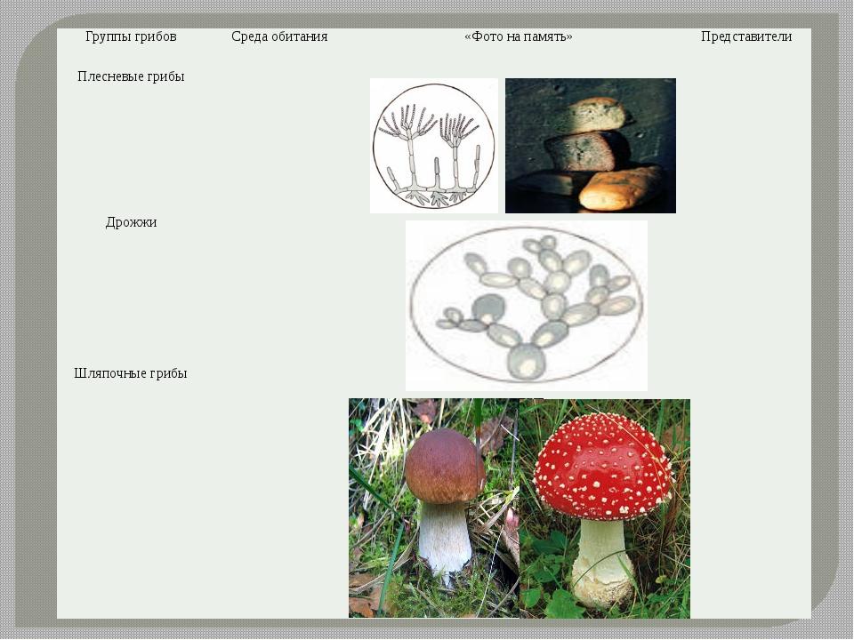 Группы грибов Среда обитания «Фото на память» Представители Плесневые грибы Д...