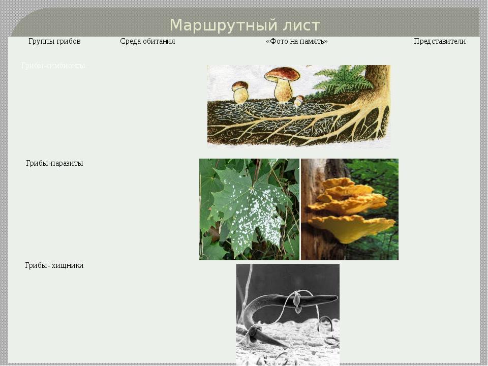 Маршрутный лист Группы грибов Среда обитания «Фото на память» Представители Г...