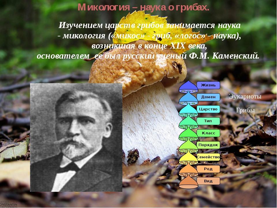 Микология – наука о грибах. Изучением царств грибов занимается наука -миколо...