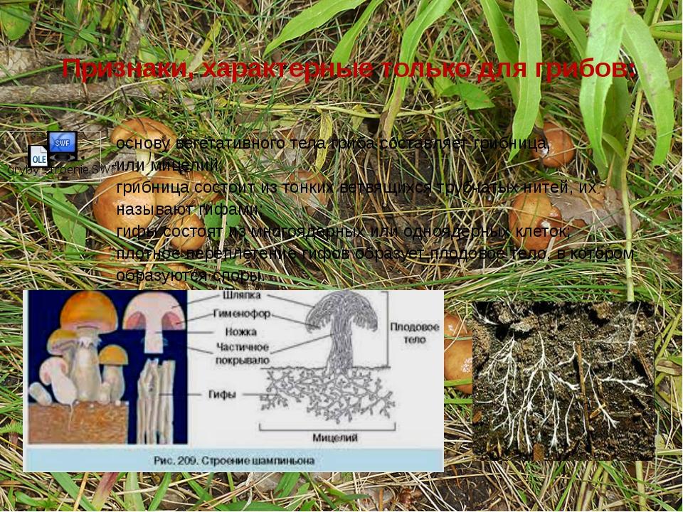 Признаки, характерные только для грибов: основу вегетативного тела гриба сост...