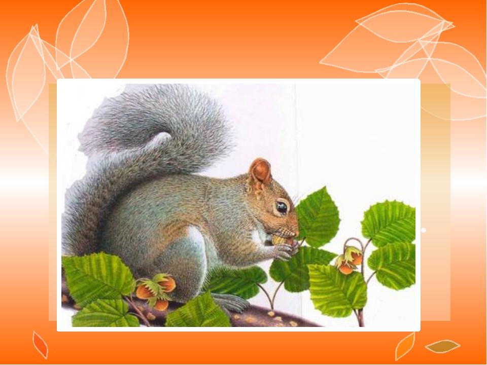 На ветке не птичка – Зверек – невеличка, Мех теплый, как грелка. Кто же это?