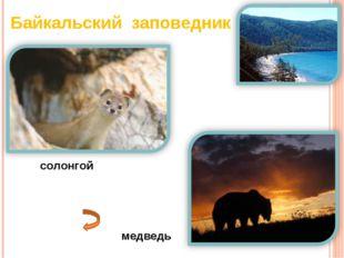 Байкальский заповедник солонгой медведь