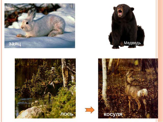заяц медведь лось косуля Медведь