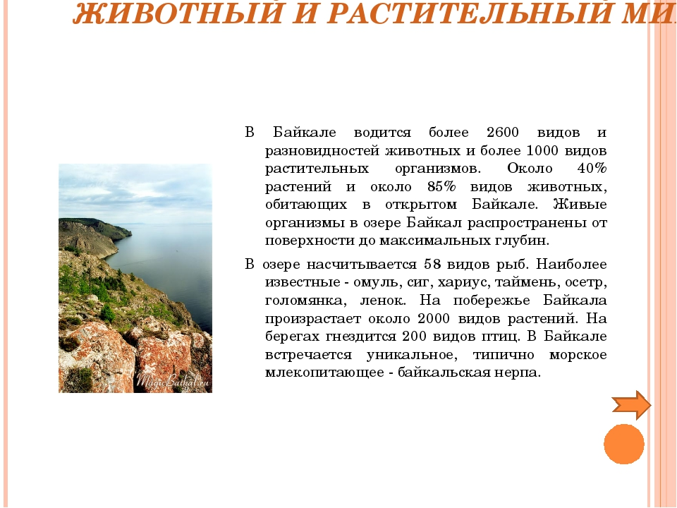 ЖИВОТНЫЙ И РАСТИТЕЛЬНЫЙ МИР В Байкале водится более 2600 видов и разновиднос...