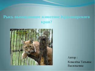 Рысь вымирающее животное Красноярского края? Автор : Ковалёва Татьяна Василье