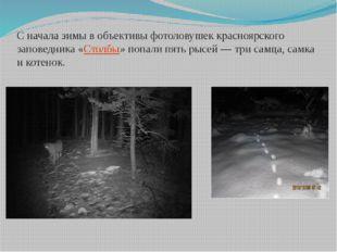 Сначала зимы вобъективы фотоловушек красноярского заповедника «Столбы» попа