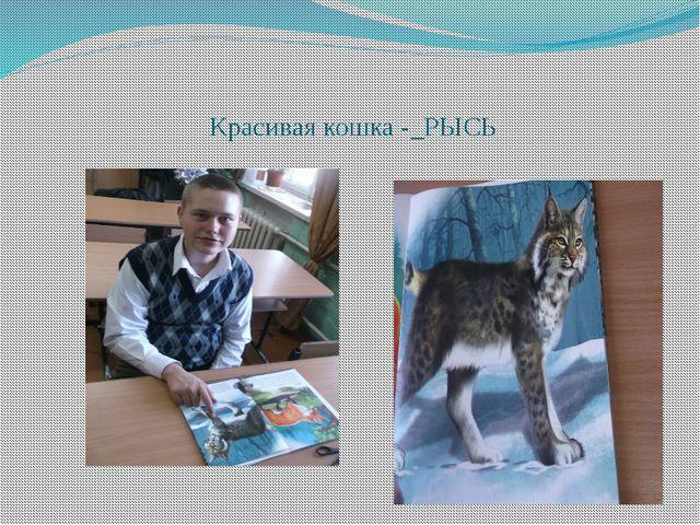 Красивая кошка -_РЫСЬ