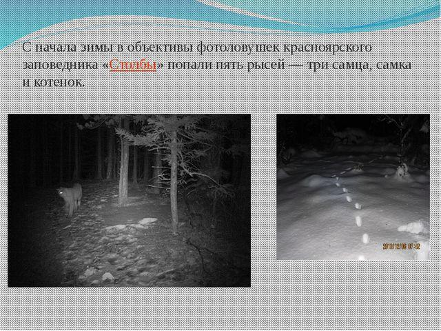Сначала зимы вобъективы фотоловушек красноярского заповедника «Столбы» попа...