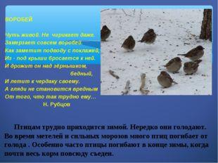 Птицам трудно приходится зимой. Нередко они голодают. Во время метелей и сил