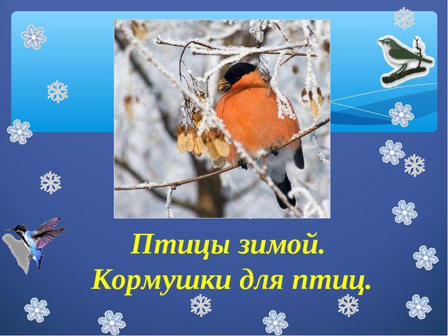 Птицы зимой. Кормушки для птиц. Птицы зимой