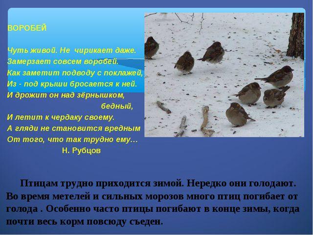 Птицам трудно приходится зимой. Нередко они голодают. Во время метелей и сил...