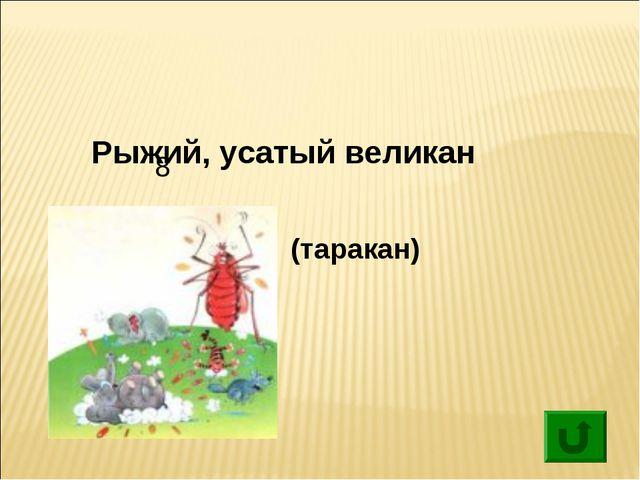 8 Рыжий, усатый великан (таракан)