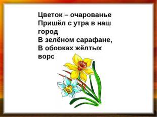 Цветок – очарованье Пришёл с утра в наш город В зелёном сарафане, В оборках ж