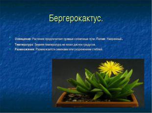 Бергерокактус. Освещение:Растение предпочитает прямые солнечные лучи. Полив: