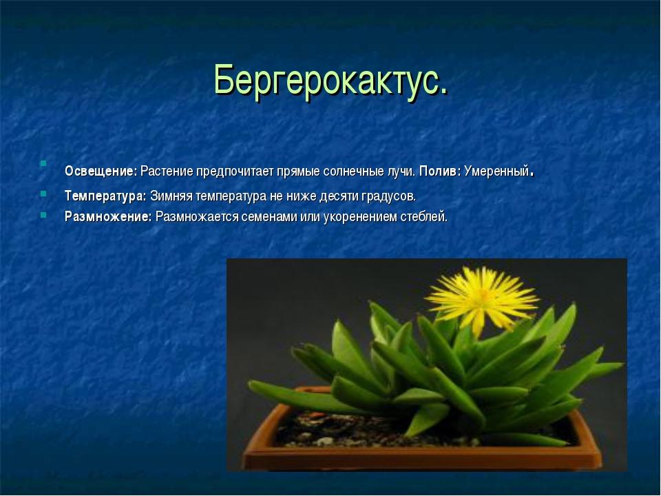 Бергерокактус. Освещение:Растение предпочитает прямые солнечные лучи. Полив:...