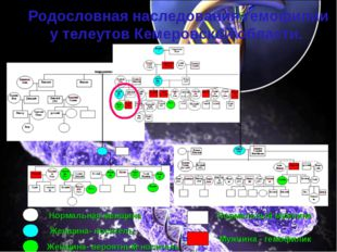 Родословная наследования гемофилии у телеутов Кемеровской области. Нормальна