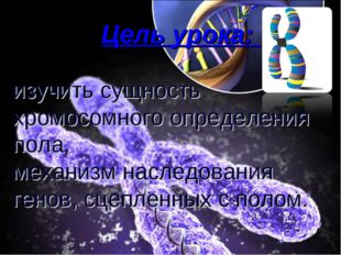 Цель урока: изучить сущность хромосомного определения пола, механизм наследо