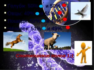 Голуби: 50% и 50% Овцы: 49% и 51% Лошади: 52% и 48% Человек: 51% и 49% Соотно