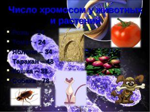 Число хромосом у животных и растений Рожь – 14 Томат - 24 Яблоня – 34 Таракан