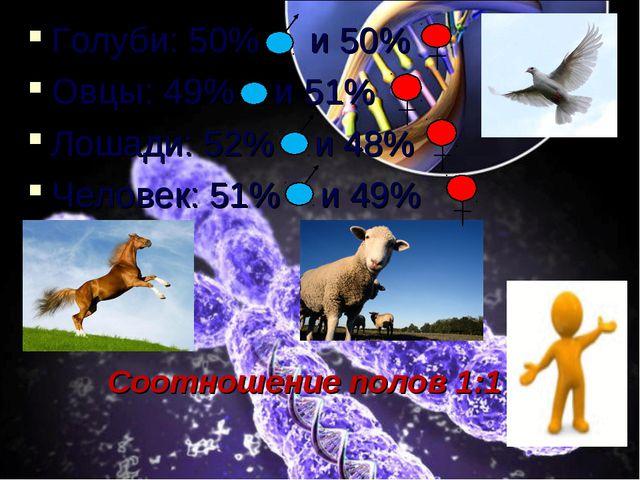 Голуби: 50% и 50% Овцы: 49% и 51% Лошади: 52% и 48% Человек: 51% и 49% Соотно...