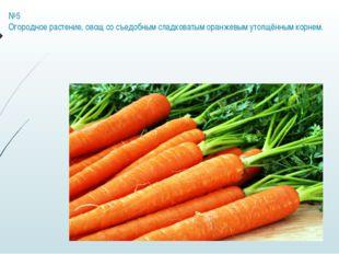 №5 Огородное растение, овощ со съедобным сладковатым оранжевым утолщённым кор
