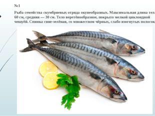 №1 Рыба семейства скумбриевых отряда окунеобразных. Максимальная длина тела —