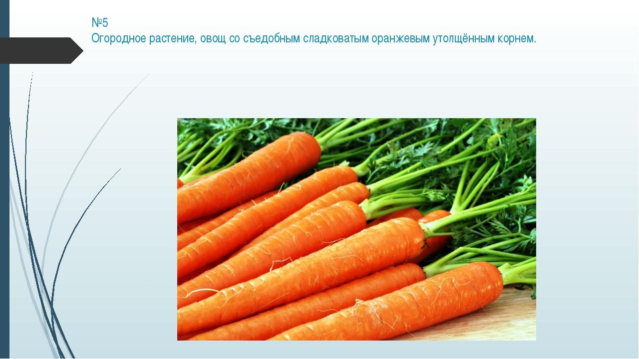 №5 Огородное растение, овощ со съедобным сладковатым оранжевым утолщённым кор...