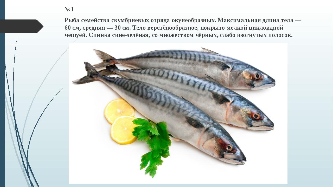 №1 Рыба семейства скумбриевых отряда окунеобразных. Максимальная длина тела —...
