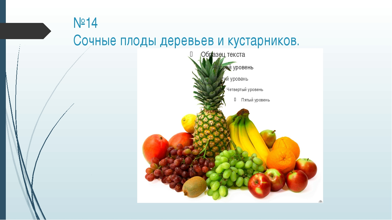 №14 Cочные плоды деревьев и кустарников.