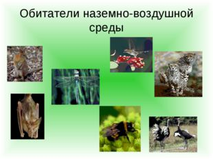 Обитатели наземно-воздушной среды