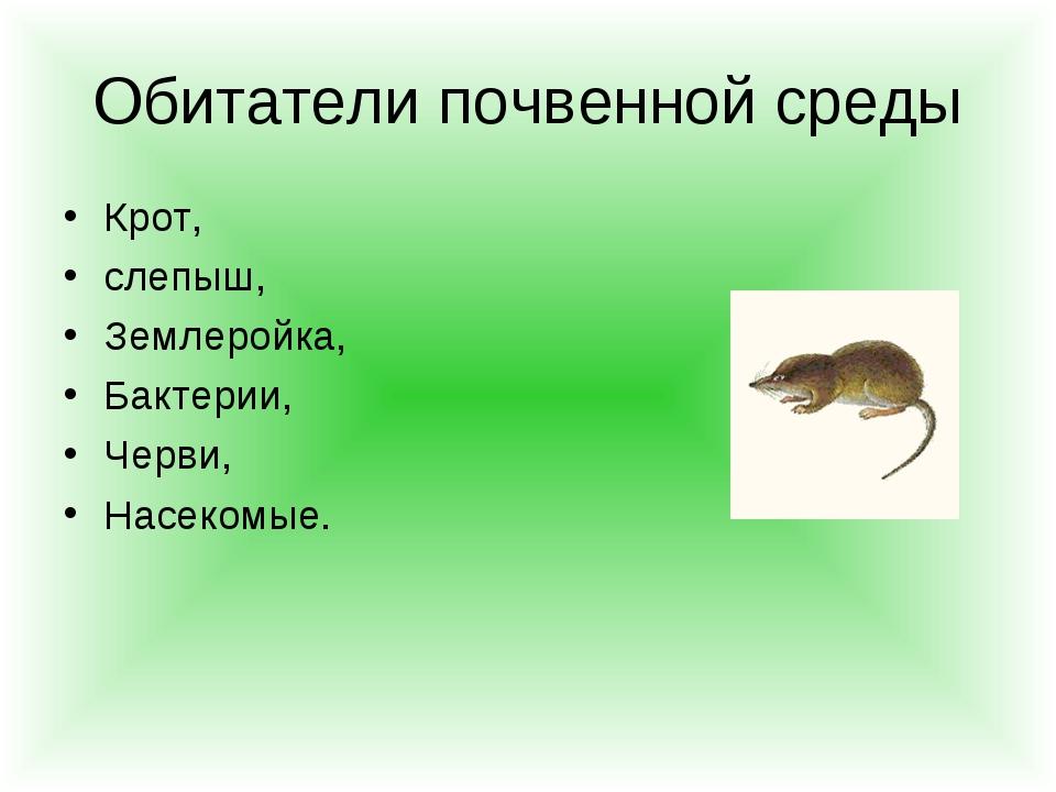 Обитатели почвенной среды Крот, слепыш, Землеройка, Бактерии, Черви, Насекомые.