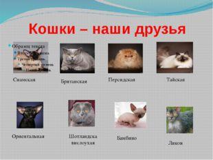 Кошки – наши друзья Сиамская Тайская Британская Персидская Шотландска вислоух
