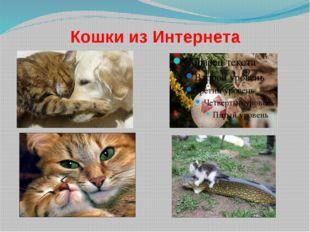 Кошки из Интернета