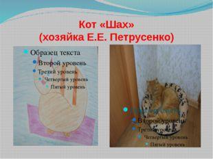 Кот «Шах» (хозяйка Е.Е. Петрусенко)