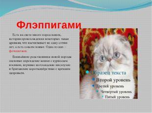 Флэппигами Есть на свете много пород кошек, история происхождения некоторых