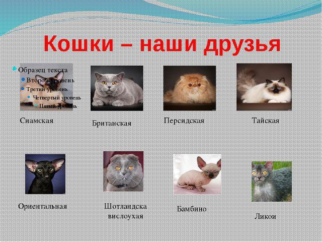 Кошки – наши друзья Сиамская Тайская Британская Персидская Шотландска вислоух...