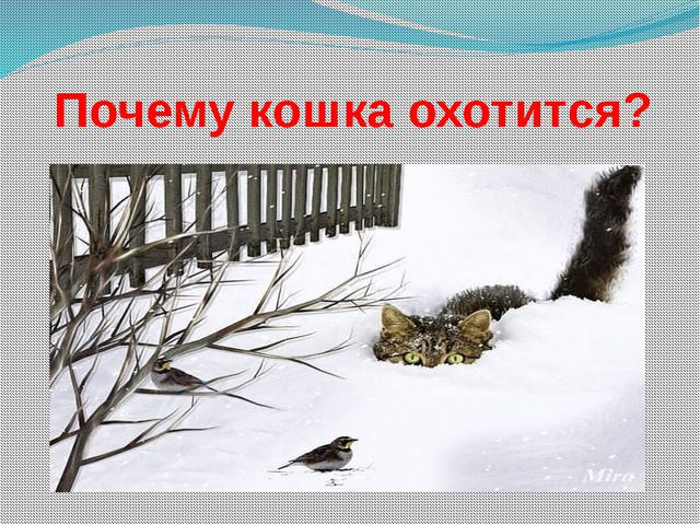 Почему кошка охотится?