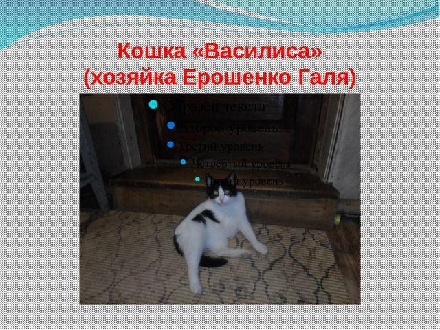 Кошка «Василиса» (хозяйка Ерошенко Галя)