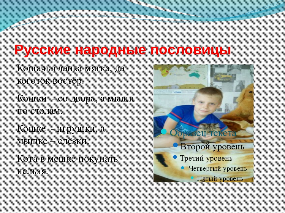 Русские народные пословицы Кошачья лапка мягка, да коготок востёр. Кошки - со...