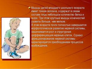 Мышцы детей младшего школьного возраста имеет тонкие волокна, содержат в свое