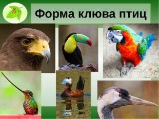 Форма клюва птиц